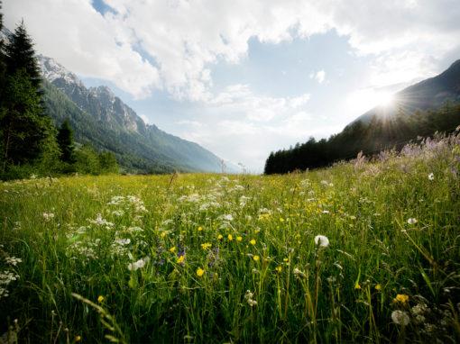 Natur, Landwirtschaft
